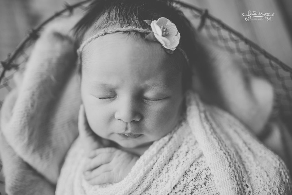 Ottawa newborn photographers, newborn photography
